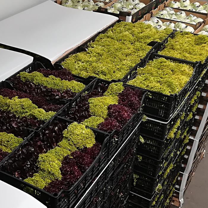 SDM Großgrünmarkt Sortiment Gemüse