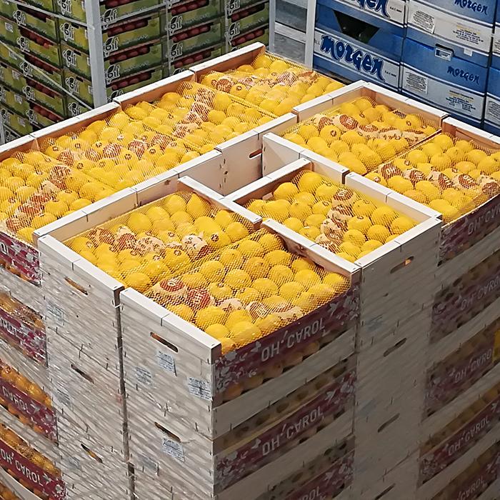 SDM Großgrünmarkt Sortiment Obst