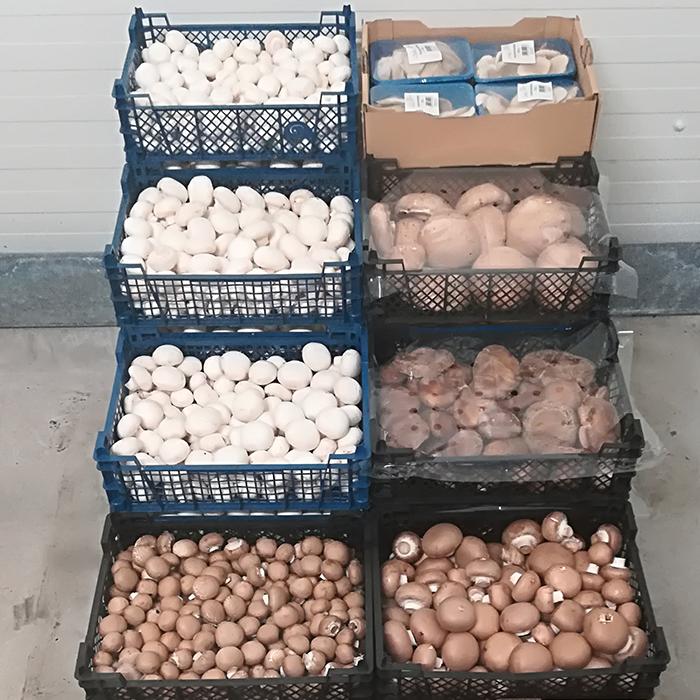 SDM Großgrünmarkt Sortiment Pilze